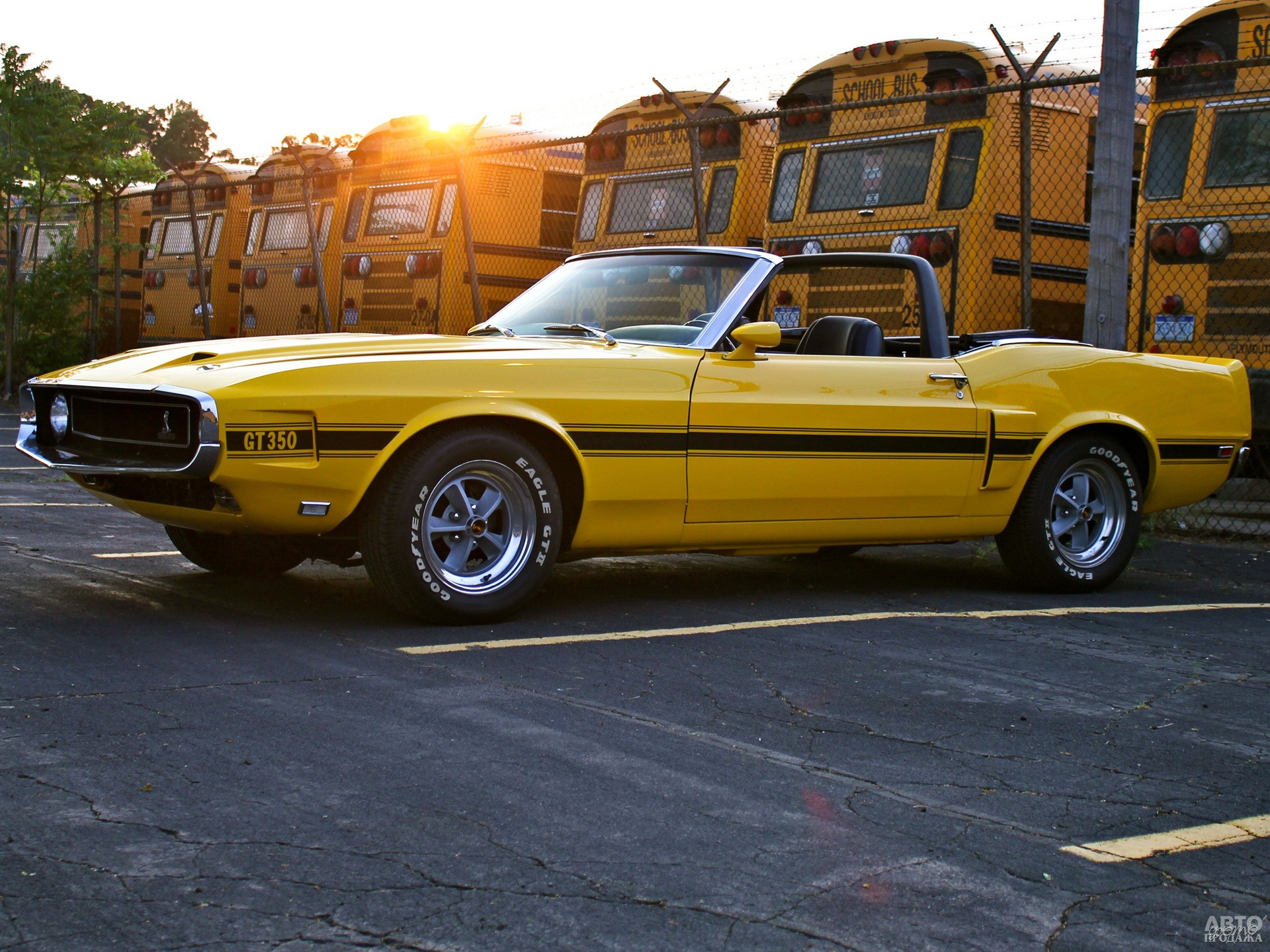 Shelby GT350 Convertible 1969 года
