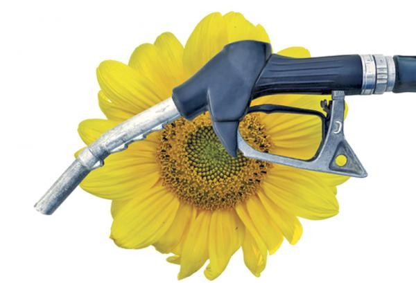 Украинцы будут заправлять автомобили биотопливом