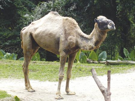 Парковка – тюрьма – верблюд